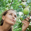 Beautiful girl picking pears in garden — Stock Photo