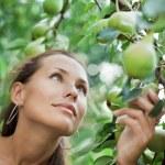 Beautiful girl picking pears in garden — Stock Photo