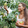Beautiful woman picking the pear — Stock Photo #1052046