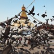 Boudha Nath stupa flight of doves - Stock Photo