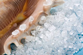Sea shell with dead sea salt on blue — Stock Photo