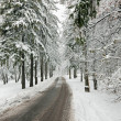 Foto Stock: Winter road in snow-covered forest