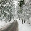 zimní cesta v zasněžených lesů — Stock fotografie