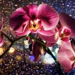 Stock Photo: Pink orchid on colored background