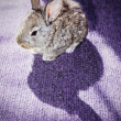 Baby rabbit on carpet with its shadow — Stock Photo #1766334