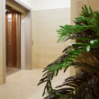 Passenger lift with green plant - Stock Photo