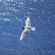 Flying seagull over sea waves — Stock Photo