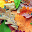 Collection of autumn leaves — Stock Photo #1216331