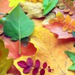 Collection of autumn leaves — Stock Photo #1216561