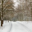 Road to winter wood — Stock Photo