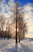 Zonne-winterlandschap — Stockfoto