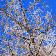 Tree branches with hoarfrost - Stock Photo