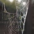 Morning dew on spider web beauty close-u - Stock Photo