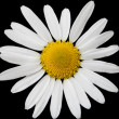 chamomile flower&quot — Stock Photo