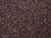 Tea crop — Stock Photo