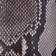 Stock Photo: Snakeskin or crocodile texture