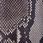 Snakeskin or crocodile texture — Stock Photo