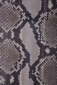 Snakeskin or crocodile texture — ストック写真