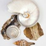 Shells and stones — Stock Photo