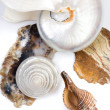 Foto Stock: Shells and stones