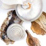conchas y piedras — Foto de Stock