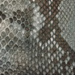 Snake skin texture - 
