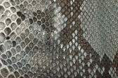 Textura de la piel de serpiente — Foto de Stock