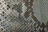 Orm hud textur — Stockfoto