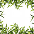 Bamboo leaf background — Stock Photo