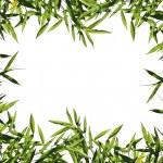 Bamboo leaf background — Stock Photo