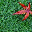 Red fall leaf - Foto de Stock  