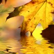 Fall tree leaf background — Stock Photo