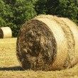 Rural scene of bales — Stock Photo