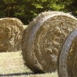 Royalty-Free Stock Photo: Fiedl and bales