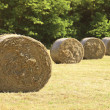 Hay bale in the fiedl - Stock Photo