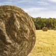 Bale hay background — Stock Photo