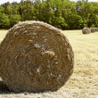 Stock Photo: Bale hay