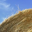 Stock Photo: Bale and sky