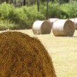 Closeup of hay bale - Stock Photo