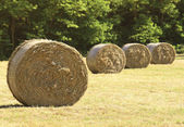 Hay bale in the fiedl — Stock Photo