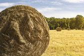 Bale hay background — Stock Photo
