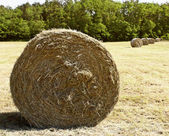 Bale hay — Stock Photo