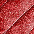 Red leaf background — Stock Photo #1081921