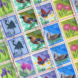 Bird stamp - Stock Photo