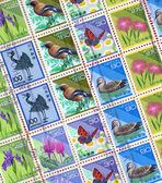 Bird stamp — Stock Photo
