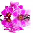Pink orchid — Stock Photo #2419985