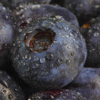 Wet blueberry datail — Stock Photo #2530311