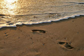 Traces on sand — Stock Photo