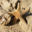 Stock Photo: Star and sand