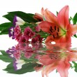 Lilies and their reflection — Stock Photo